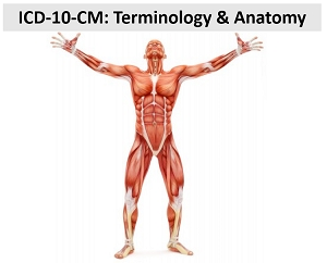 ICD-10: Terminology & Anatomy for ICD-10